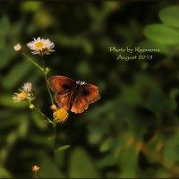 Бабочка :: Джоанна Куз