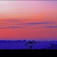 туманный вечер :: Дмитрий Анцыферов