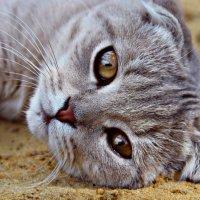 Кошачья натура :: Екатерина Капустина
