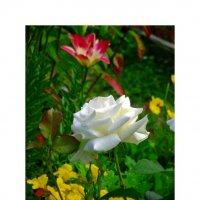 Цветок4 :: Настя Курганская