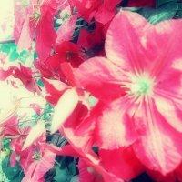 цветы :: N. Kril.