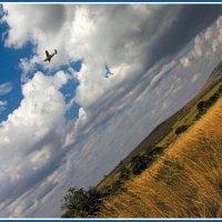 Полёт над Африкой :: Евгений Печенин