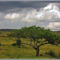 Где-то на просторах Кении :: Евгений Печенин