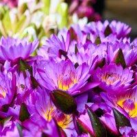 цветы для храма :: Victoria Shashirina