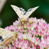 бабочки :: Геннадий Беляков