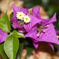 цветы :: Сергей Старовойт