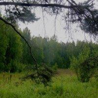 В дождь :: Александр Садовский