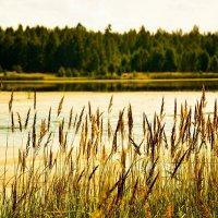 На пруду, на берегу :: Katya Nike