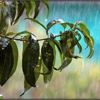 летний дождь :: Sergey Bagach