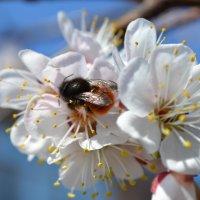 Весна :: Сергей Михайлов