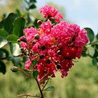 Южные цветы :: Diana Alekseevna