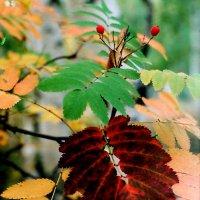 осень :: елена юлашева