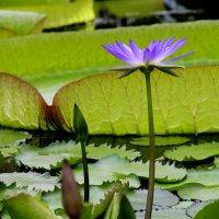 В Ботаническом саду :: Наталья Каравай