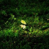 Солнечный лучик :: юрий Амосов