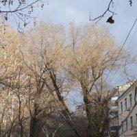 Феодосия в марте :: Иван Начинка