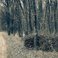Осенний лес :: Степан Филёв