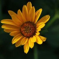 цветок :: Ольга Зарецкая