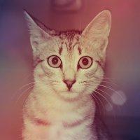 мой котёнок :: Ольга Зарецкая