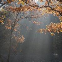 Осень в утреннем света :: Юрий Цыплятников
