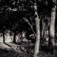 Дерево :: Михаил Сотников
