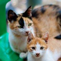 Кира и ее сын Сеня :: Katya Briz