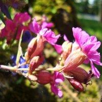 Привет из леса :: Лидия (naum.lidiya)
