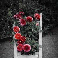 Урожай :: Mari_L