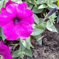 Красивый Цветок :: Борис Хантер