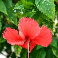 Цветы острова Ко Ранг Яй :: Виктор Куприянов
