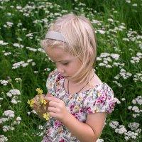 Цветочек полевой :: Ксения Порфирьева
