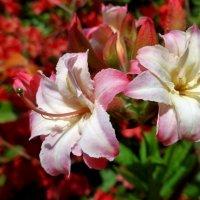 Rhododendron :: Nina Yudicheva