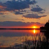 Вечерние лучи :: Анна Васильева (Anna-82V)