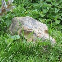 Камень или череп- вот в чем вопрос... :: Крылова Светлана