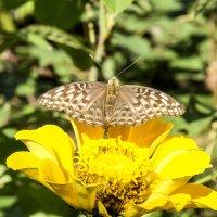 Бабочка :: ofinogen