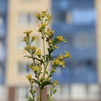 Городские цветы .... не затейливы не капризны. :: Анатолий. Chesnavik.