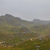 дождь в горах.Север Черногории. :: Олег Семенов