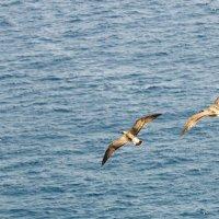 Чайки на море :: Alexander