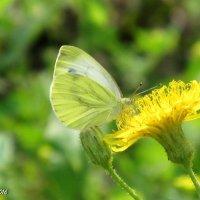 Цветок и бабочка :: OLLES