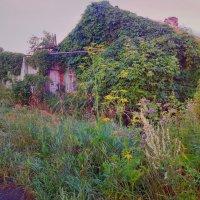 Под зелёным покрывалом буйного лета! :: Елена (Elena Fly) Хайдукова