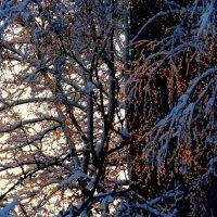 перед зимним закатом :: Александр Прокудин