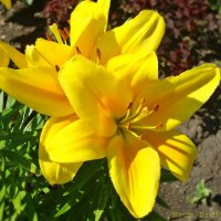 Солнечные красотки :: Лидия (naum.lidiya)