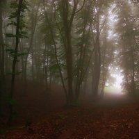 Таинственный лес :: Екатерина Постонен
