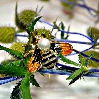 Бижутерная пчелка. :: Михаил Столяров