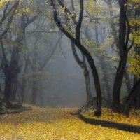 На ковре из желтых листьев........... :: Юрий Цыплятников