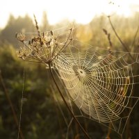 Ловец утра :: Андрей Михайлин