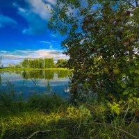 Лесная протока :: Андрей Кузнецов