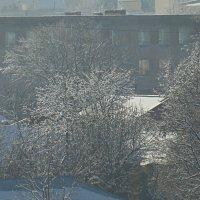 Серебряные деревья :: Syntaxist (Светлана)