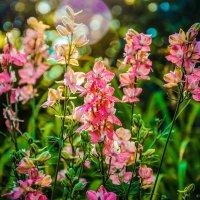 Цветочки :: Юрий Фёдоров