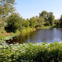 Озеро лотосов :: Dr. Olver ( ОлегЪ )
