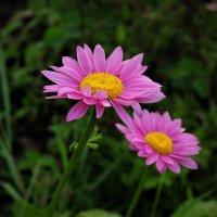 Июльские цветы :: Вячеслав Маслов